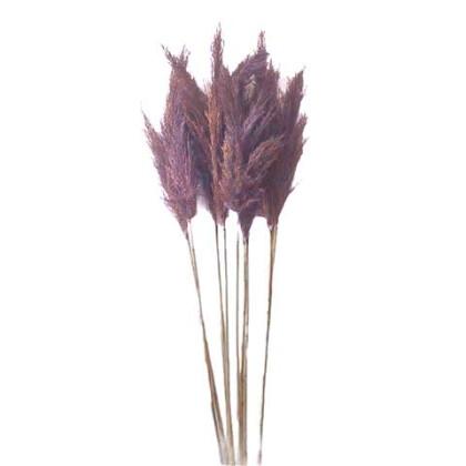 Pampas Grass Μωβ 160εκ