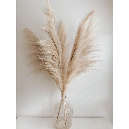 Fluffy Pampas Grass Μπεζ Φυσικό 115εκ