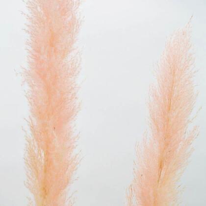 Fluffy Pampas Grass Ροζ 140εκ XL